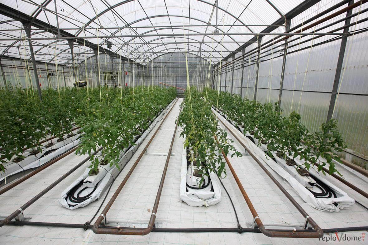 Бизнес план тепличное хозяйство бизнес план кодекс